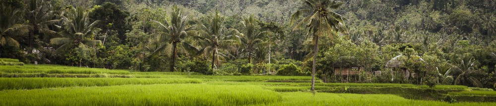 The rice paddies and village near Kerta Gangga waterfalls, Lombo