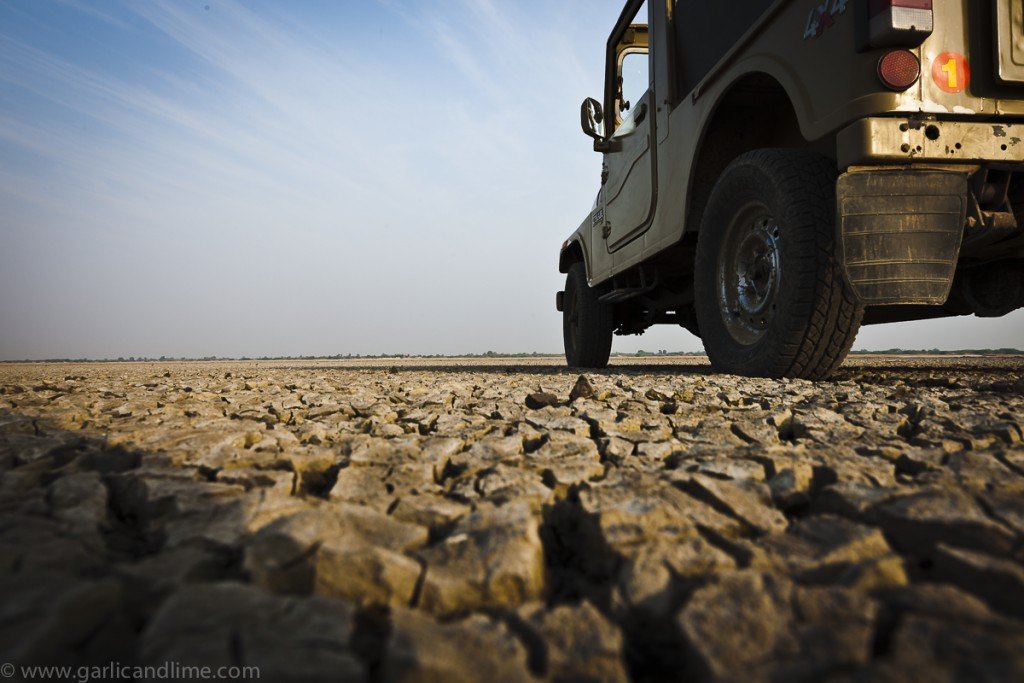 Driving on the salt lake at Little Rann, Gujarat, India (Februar