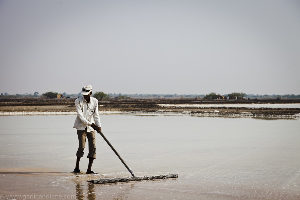 Man harvesting salt on the salt lake at Little Rann, Gujarat, In