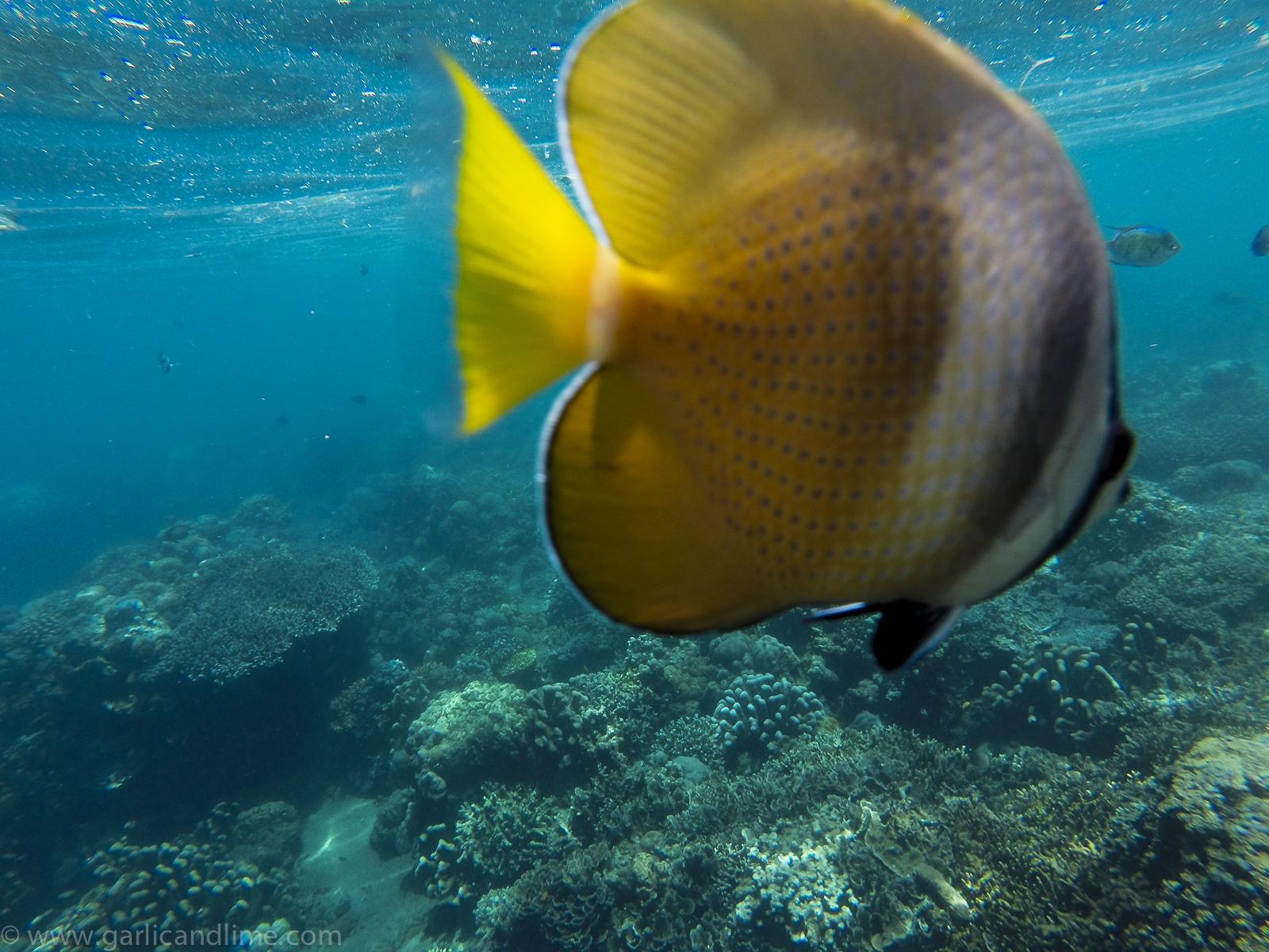 Snorkeling Pulau Bunaken Sulawesi Indonesia